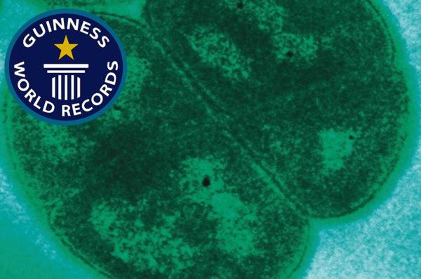بكتيريا تدخل كتاب غينيس !