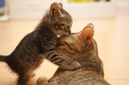 هل تشعر الحيوانات بالحب ؟