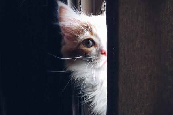 6 حقائق علمية حول القطط